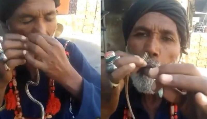 VIDEO: बाबा ने नाक में डाल लिया जिंदा सांप फिर हुआ कुछ ऐसा…, वीडियो देख आंखे रह जाएंगी फटी की फटी