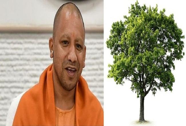योगी सरकार की पहल: विकास कार्यों के लिए पेड़ों को काटा नहीं बल्कि दूसरी जगह किया जा रहा पुन: स्थापित