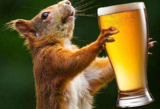 तमिलनाडु: लॉकडाउन में बंद थी शराब की दुकान, चूहों ने खाली कर दी 12 बोतलें