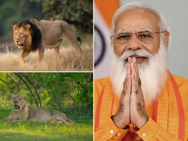 World Lion Day पर PM Modi याद आया गुजरा हुआ वक्त, बोले- जब वे गुजरात के सीएम थे तब उन्होने शेरों के लिए…