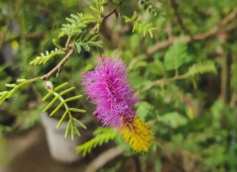 सावन 2021: इन पत्तियों में होता है शिव का वास,चढ़ाने पर मिलता है मनोवांक्षित फल