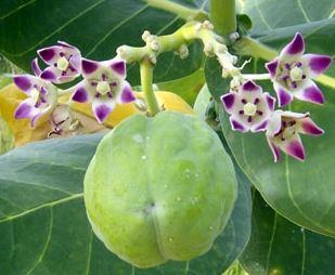 सावन 2021: भगवान शिव को प्रिय है ये पौधा, महादेव को फूल और पत्ते दोनों चढ़ाते हैं