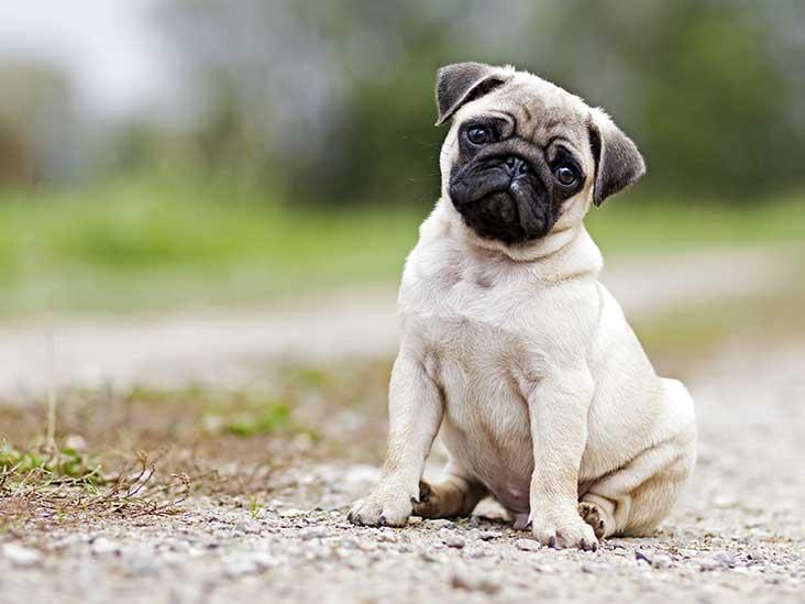 जानिए कैसे महसूस करा सकते हैं आप अपने पालतू जानवरों (Pet animals) को बेहतर
