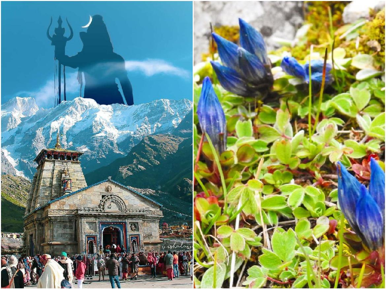 Miracle in Kedarnath: Vasukital Kund से 3 किमी क्षेत्र में सालों बाद खिले नीलकमल के फूल