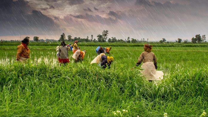 केंद्र के ध्यान नहीं देने से गिरे कृषि उत्पादों के दाम