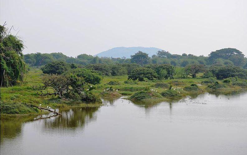 Vedanthangal Bird Sanctuary: अपने अंदर इतिहास का खजाना समेटे है ये पक्षी विहार, पक्षी प्रेमियों को करती है आकर्षित