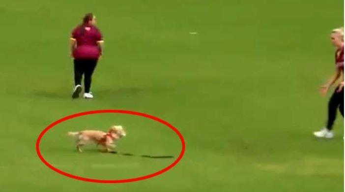 सेमीफाइनल मैच में पड़ी बाधा,चलते मैच से गेंद लेकर भागा कुत्ता