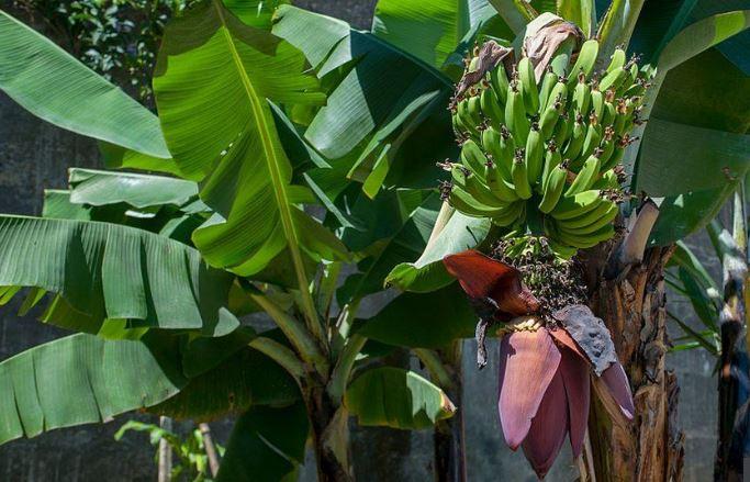 केले के अलावा इन पौधों में भी गुरु वृहस्पति का होता है वास,देवगुरु को करें इन मंत्रों से प्रसन्न