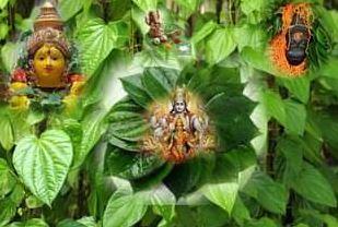 Auspicious betel : किस्मत भी बदलता है पान, बना सकता है आपके बिगड़े काम