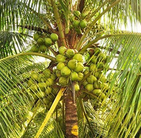 Auspicious plants: इन शुभ पौधों में छिपा सफलता का राज, मां लक्ष्मी की बरसती है कृपा