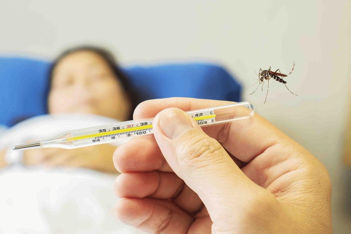 Uttar Pradesh के बाद दिल्ली में फैला Dengue का प्रकोप, 24 घंटे में मिले 190 नए मामले