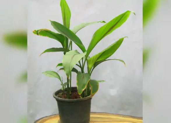 Astrology: अगर आप लगाते हैं ये पौधे तो खुशियों और रुपयों-पैसों से भरा रहेगा आपका घर