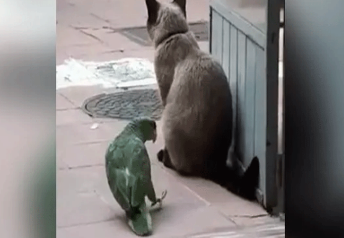 Funny Video: बिल्ली की पूंछ के साथ तोता ने किया ऐसा काम, कि बिल्ली का हुआ बुरा हाल…